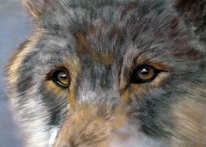 """Wolf Eyes"", 5"" x 7"" pastel, $195"