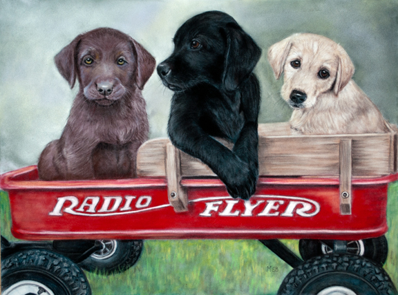 """Labrador Express"", 12"" x 16"" pastel on velour"